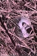 Halál Csernobilban