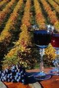 Borvidékek, pincészetek,borok....