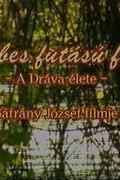 A sebes futású folyó - A Dráva élete