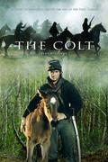 A csikó (The Colt)