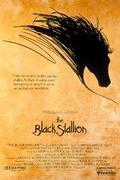 Fekete Villám (The Black Stallion)