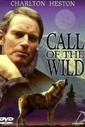 A vadon szava (Call of the Wild)