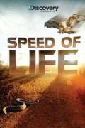 Az élet sebessége (Speed of Life)