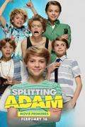 Adam és Adam (Splitting Adam.2015)