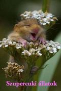 Szupercuki állatok (Super Cute Animals)