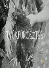 Tyúkfürösztés 1971.