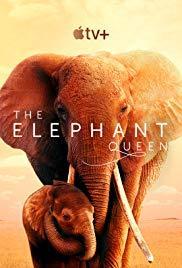 Az Elefánt királynő (The Elephant Queen) 2019.