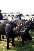 Őshonos magyar állatfajták